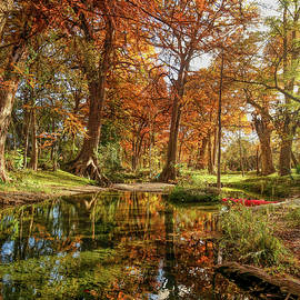 Fall Reflections at Cypress Creek Vertical by Judy Vincent