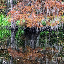 Fall Reflections on the Bayou by Scott Pellegrin