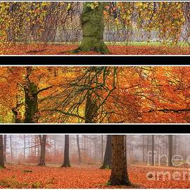 Fall tryptich by Patricia Hofmeester