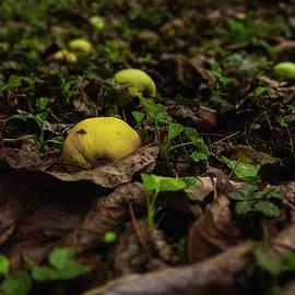 Fallen apples by Radu Dumitrache