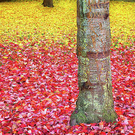 Fallen Autumn Leaves, Rothenburg Ob Der Tauber by Douglas Taylor