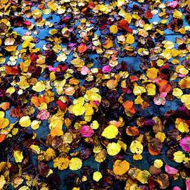 Fallen Fall Leaves by Her Arts Desire