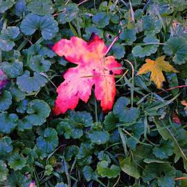 Falling Leaves Green Grass - Frank J Casella by Frank J Casella