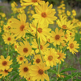Fall's Cheerful Beauties by Lynn Bauer