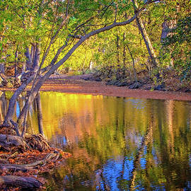 Fall's Light on Cibolo Creek by Lynn Bauer