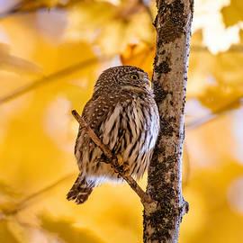 Fall's Surprise Visitor by Joy McAdams