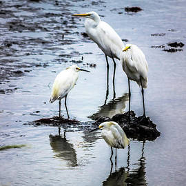 Family of Herons by Colleen Kammerer