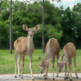 Family of Three by Kathi Isserman