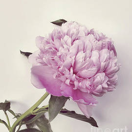 Pretty Petals  by Jeannie Rhode