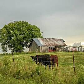 Farm Life by Connie Raynor