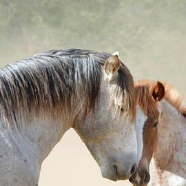 Father Son Stallion Love by Barbara Sophia Travels
