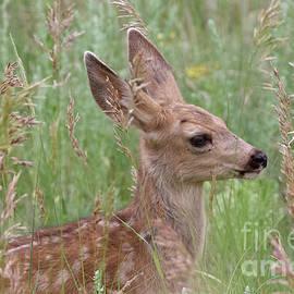 Fawn Among the Grass by Shirley Dutchkowski