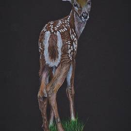 Fawn Looking Back by Jay Johnston