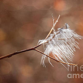 Feather In The Autumn Wind by Sharon McConnell