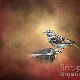 Feathered Friend by Susan Warren