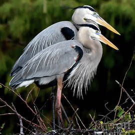 Feathered Friends by Paula Goodman