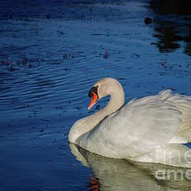 Heavenly Swan by Linda Howes