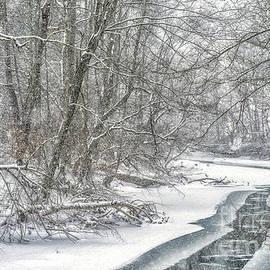 February Snow along Gauley River by Thomas R Fletcher
