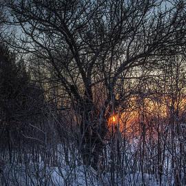 February Sunrise by Sue Capuano
