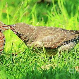 Feeding by Atiqur Rahman