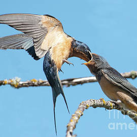 Feeding on the Wing by Jackie Follett