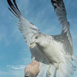 Feeding The Gulls by Kathy Baccari