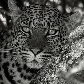 Female Black and White by MaryJane Sesto