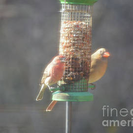 Female Cardinal and House Finch on Feeder  01-03-2020 by Ruth Housley