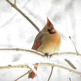 Female Cardinal in Winter  by Mary Lynn Giacomini