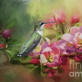 Female Ruby-Throated Hummingbird in Paradise by Debbie Morris