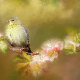 Female Lesser Goldfinch by Donna Kennedy