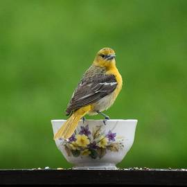 Female Oriole On Cup by Terri Waselchuk