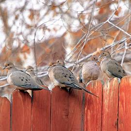 Fence Gossip by Donna Kennedy