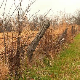Fence Line in Autumn by Phyllis Taylor