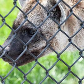 Fenced In by David Stasiak