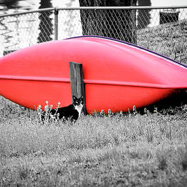 Feral Cat And Canoe Color Select by Brian Wallace