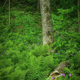 Fern and Flowers Woodland by Trey Foerster