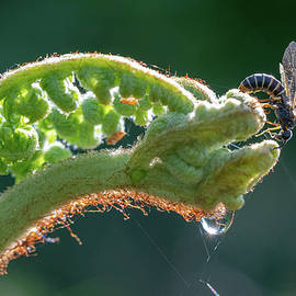 Fern and Fly
