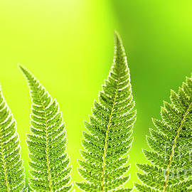 Fern shapes by Facto Foto
