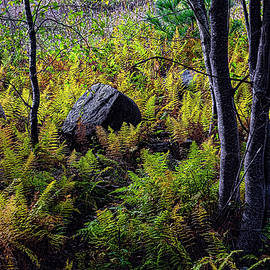 Ferns Birches and Boulders 4 by Marty Saccone