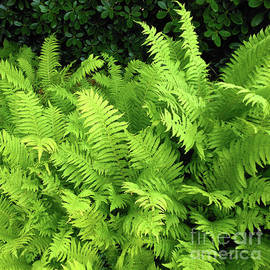 Ferns Sunbathinng by Kathryn Jones