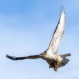 Ferruginous Hawk by Karen Slagle