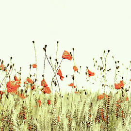 Field of Coral Poppies by Susan Maxwell Schmidt