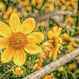 Field Of Sunshine by Jim Love
