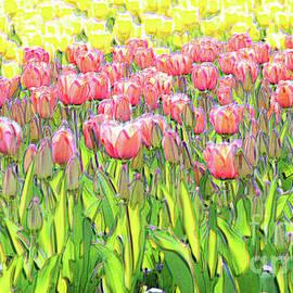 Field of Tulips by Bentley Davis