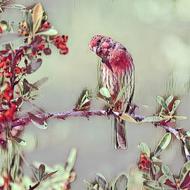 Finch on Red Berry Bush 2 in Cranberry Abstract by Linda Brody