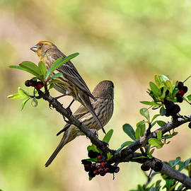 Finches Standing Guard  by Linda Brody