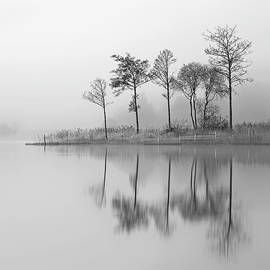 Fine Trees from the misty shore of Loch Ard by Grant Glendinning