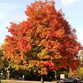 Fire Orange Tree by Charlotte Gray