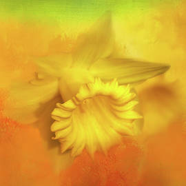 First Daffodil by Terry Davis